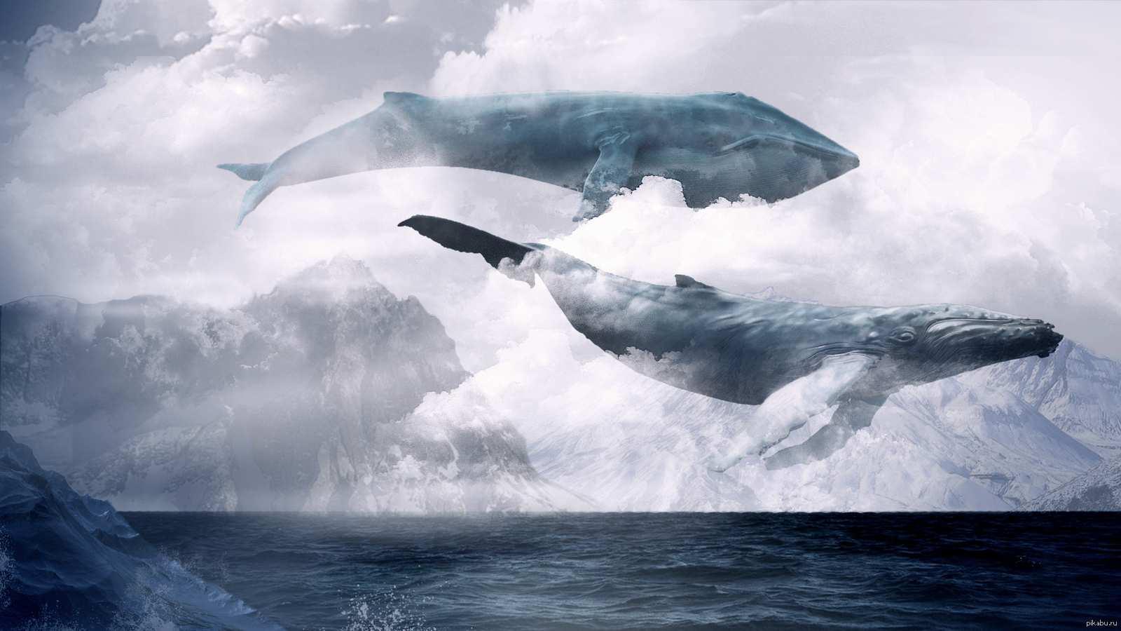 синий кит группа смерти ссылка