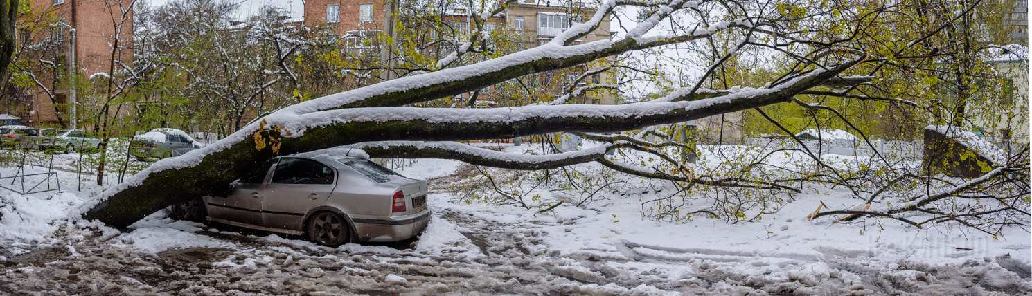 снег дерево машина