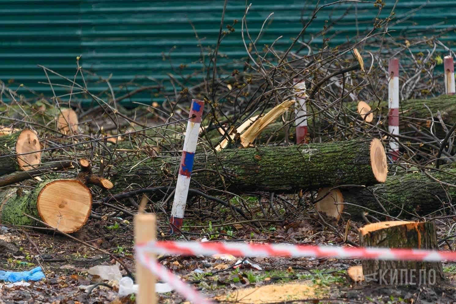 вырубка деревьев дерево обрезка парк