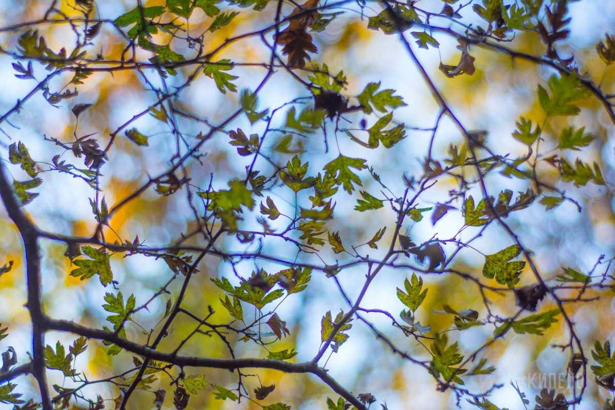 осень,лист, листва, листопад